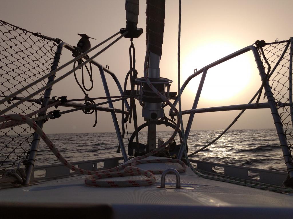 Un petit passager de la Mer Rouge
